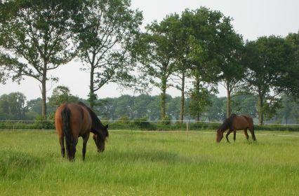 9. paarden-in-land2.jpg