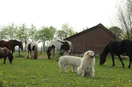 Vergaderen-pittoreske-boerderij-weide-drenthe-image-10.JPG
