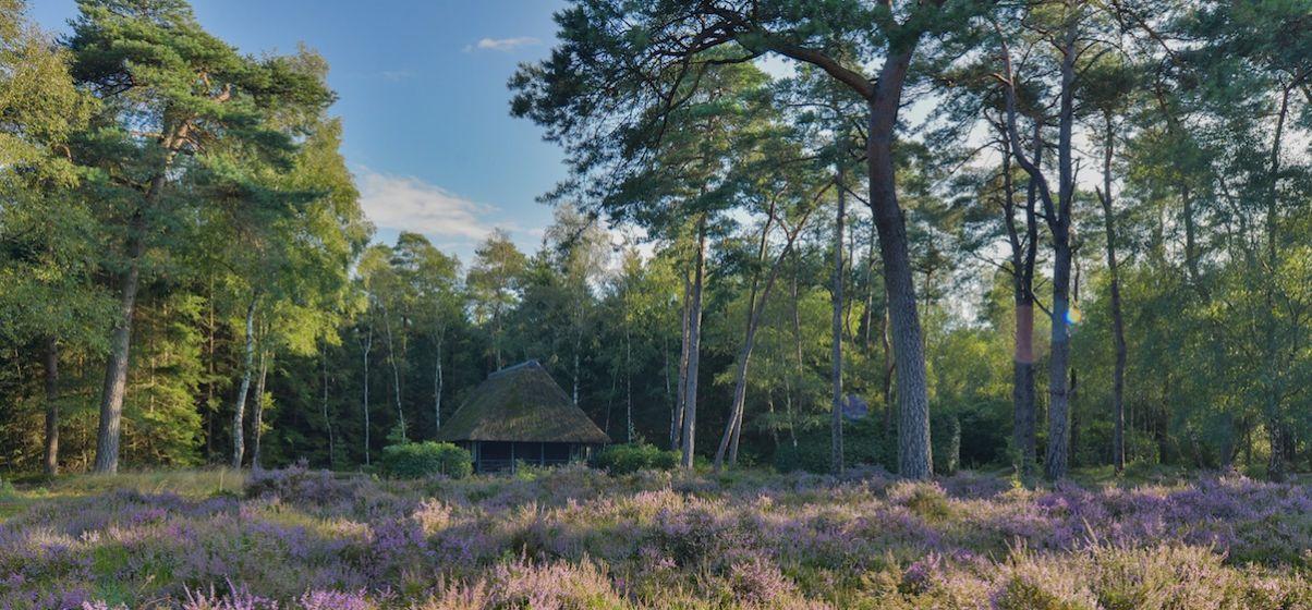 Privé-landgoed-in-de-bossen-leuvenum-gelderland-image-2.jpg