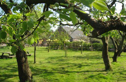 BuitenplaatsVlaardingen-boomgaard.jpg